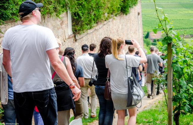 Vinocamper bei der Besichtigung in den Weinbergen von Schloss Johannisberg